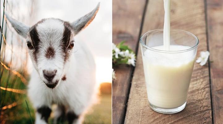 lait de chevre